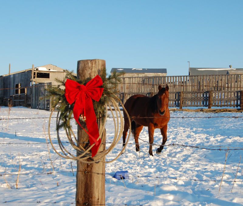Merry Christmas from the horse