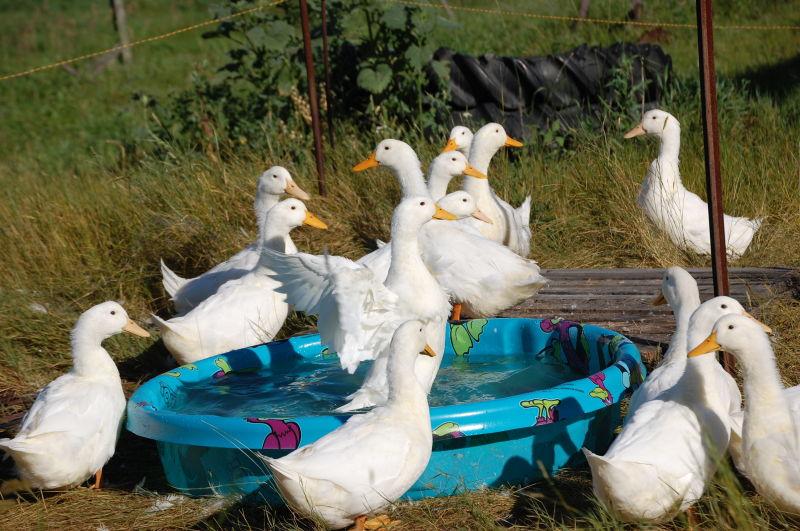 Paddleing pool