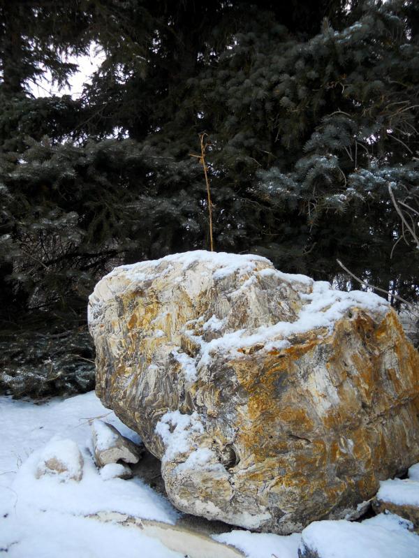 Snow on petrified wood 1