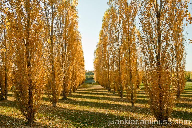 Autumn light on trees