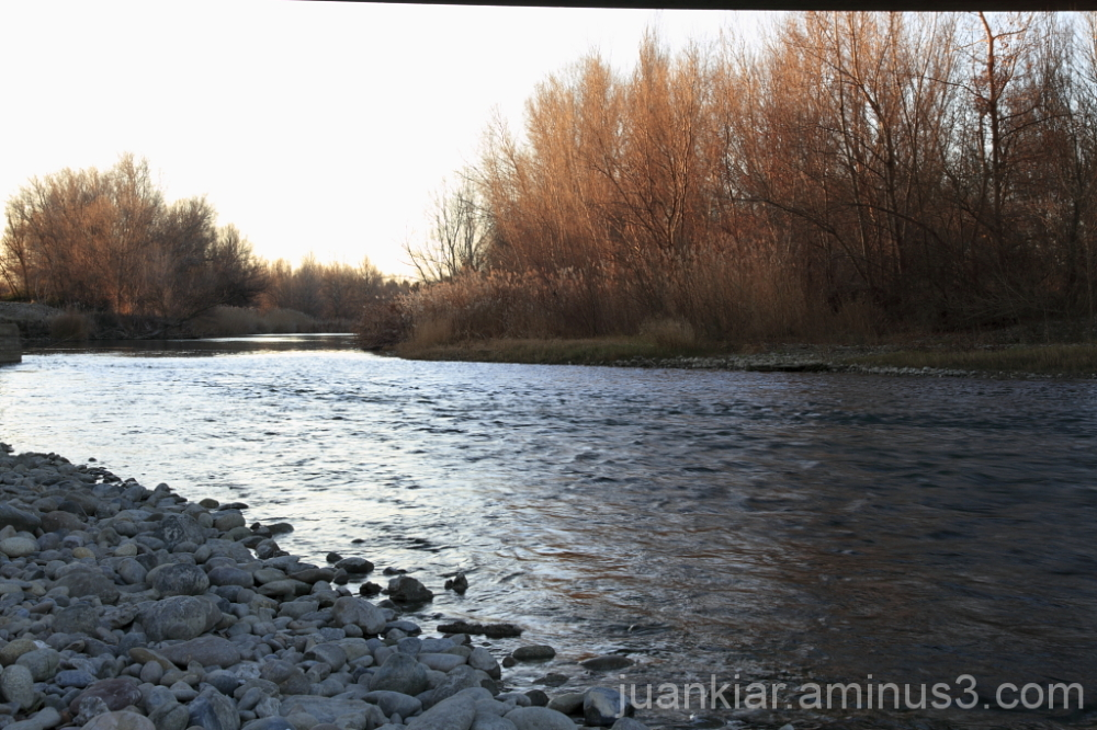 River and trees with morning light