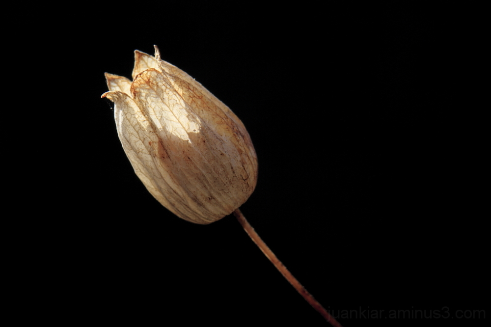 dead flower on a black background