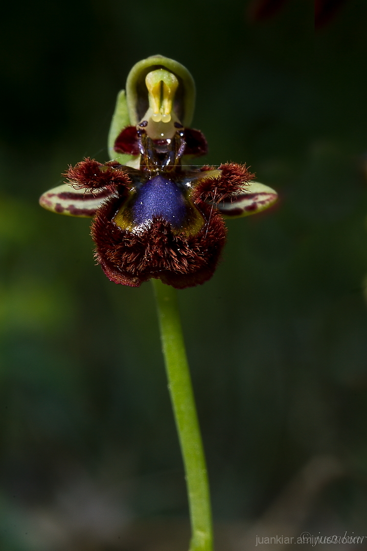 orchid on a dark background