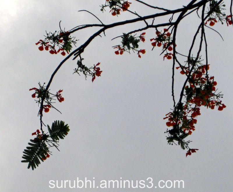 Gulmohar Branch