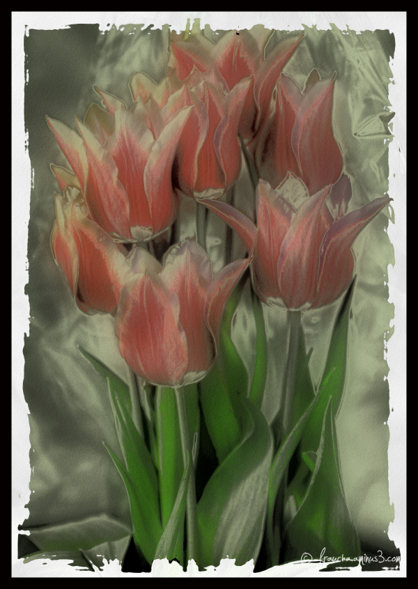 Frau's FlowerShoppe