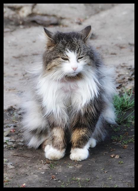 Barnyard Kitty