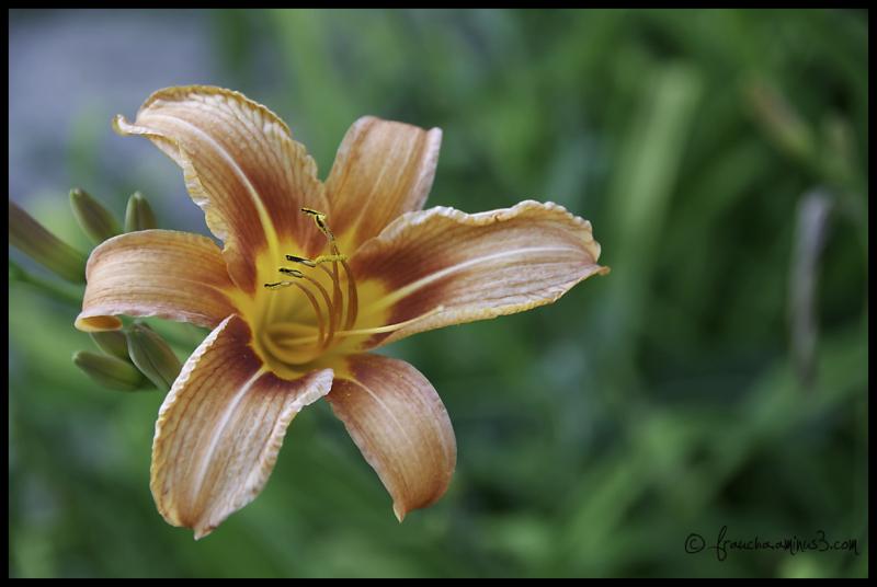 Street Flower 1