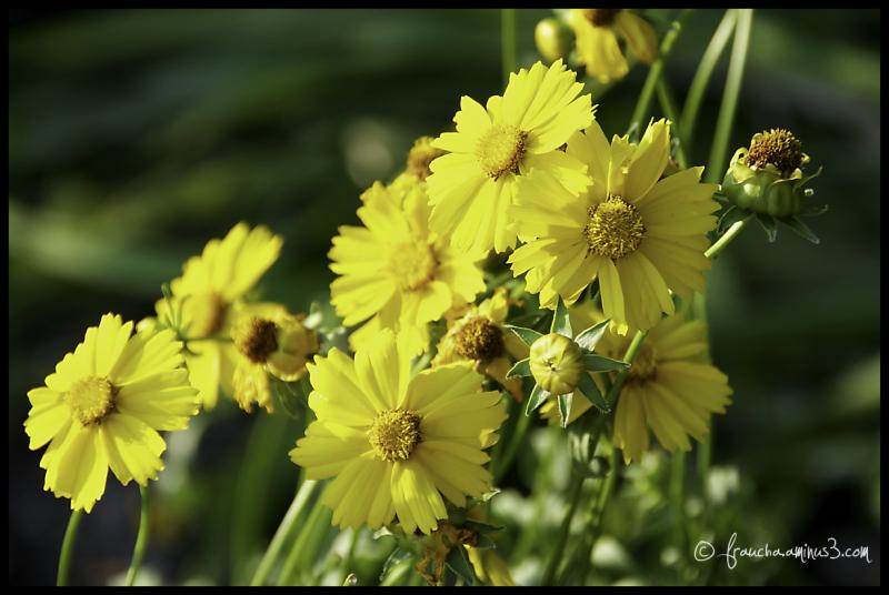 Street Flower 3