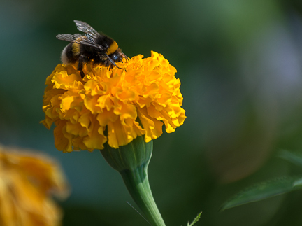 2 Bee