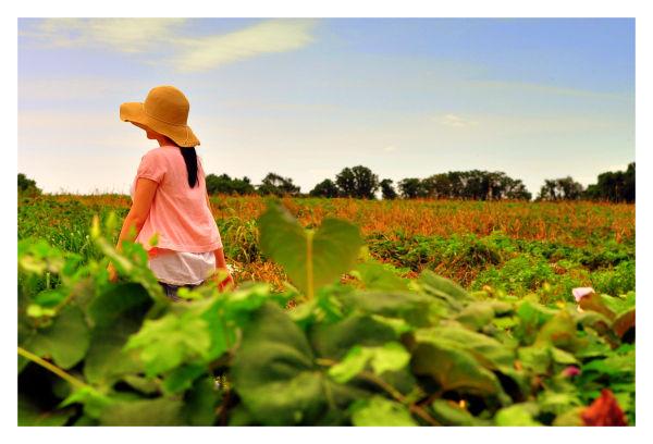 linvilla orchards, summer 2010