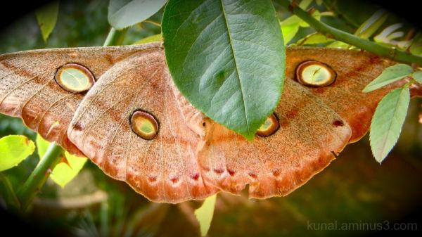 huge butterfly