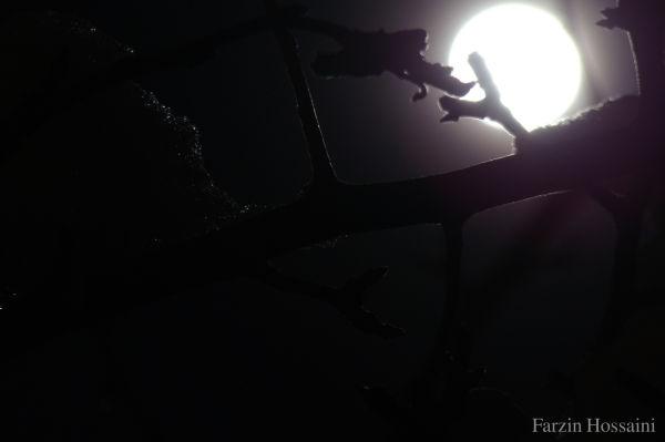 ))moon((