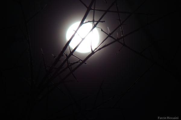 The moon *