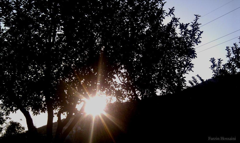 sunlight beyond tree