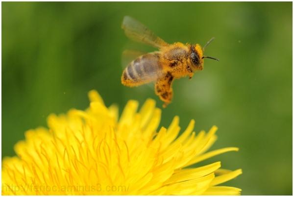 Orgie de pollen...