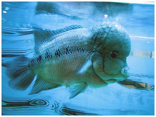 Wonderful Fish