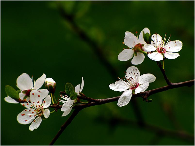 بهار, تابستان, پائیز, زمستان و باز بهار