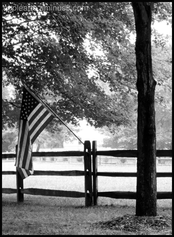 United States Flag Farm