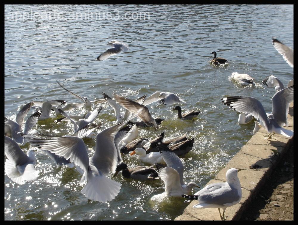 Feeding Ducks
