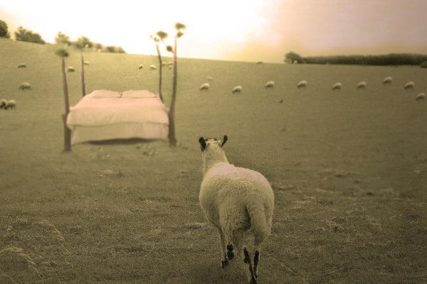 Back in line sheep, this is my dream