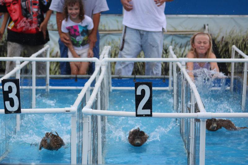 Duck races
