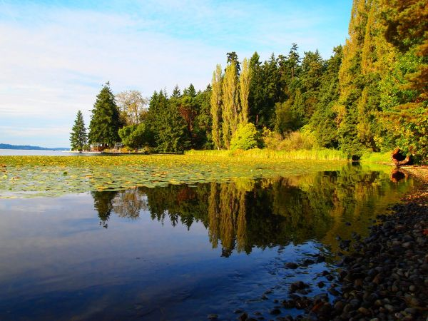 Lake Washington, Seward Park, Seattle