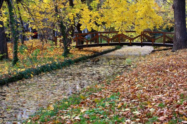 Autumn at Cseke lake.