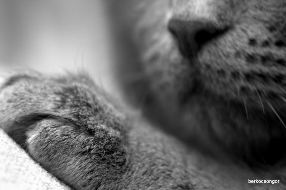 Cat with macro extension tube