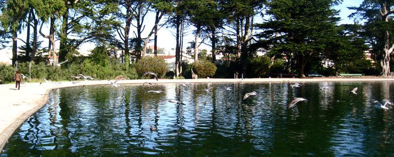 Lake at Gold en Gate Park