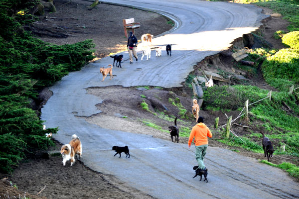Trail morning scene