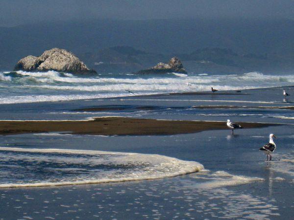 Scene of Ocean Beach