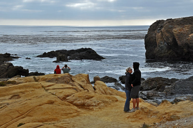 View of Point Lobos State Reserve
