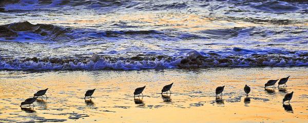 Ocean Beach sunset scene