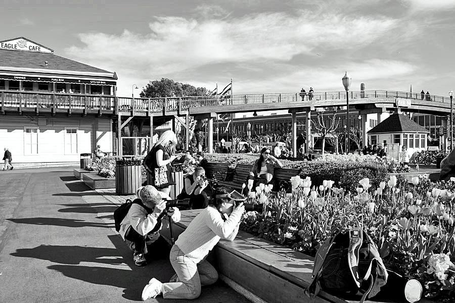 Scene at Pier 39