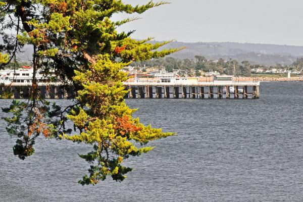 Pier of Santa Cruz Beach