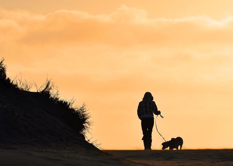 Walk Dog