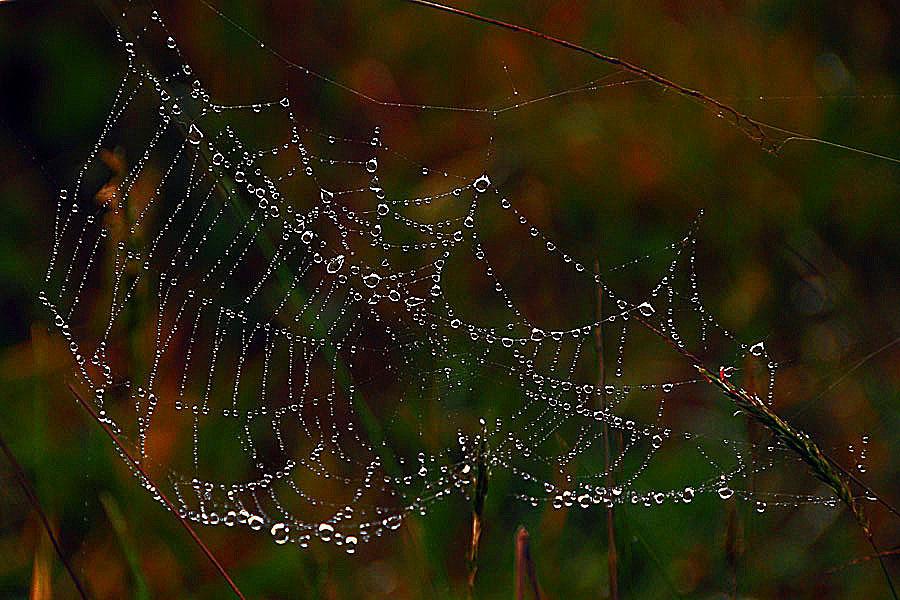 Net Drops