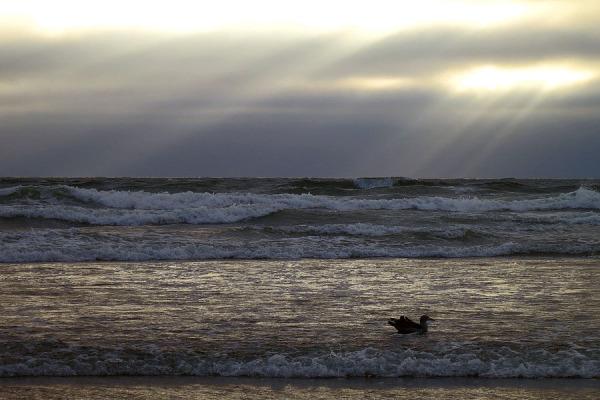 Rays, evening scene
