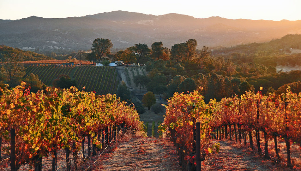 Vigilance Vineyards