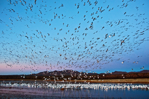 Sunrise Scene at Bosque del Apache NWR