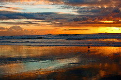 Ocean Beach evening scene last Sunday