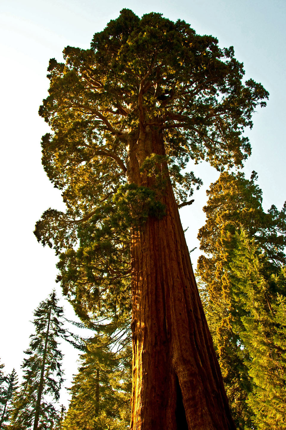 Redwood at Kings Canyon
