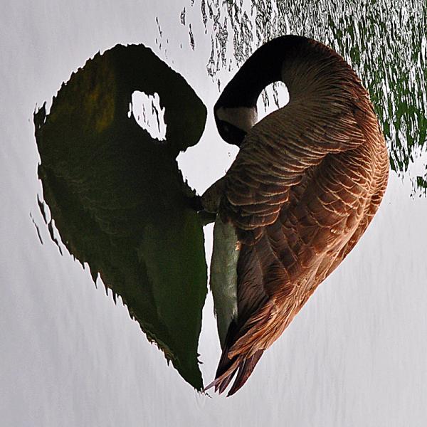"Abstract "" Heart Shape """