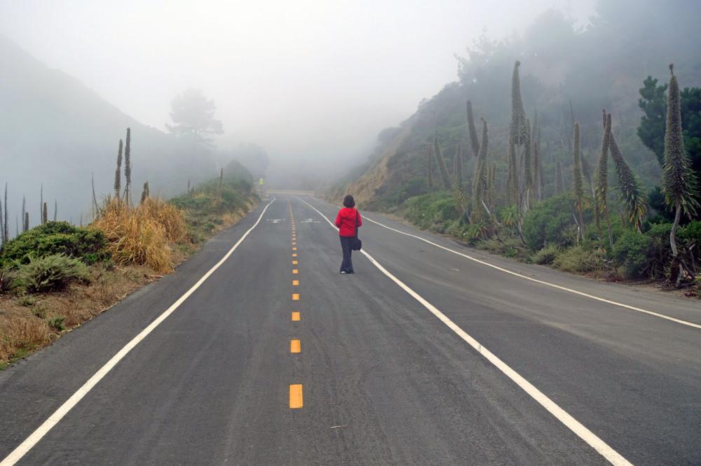 Mist Scene