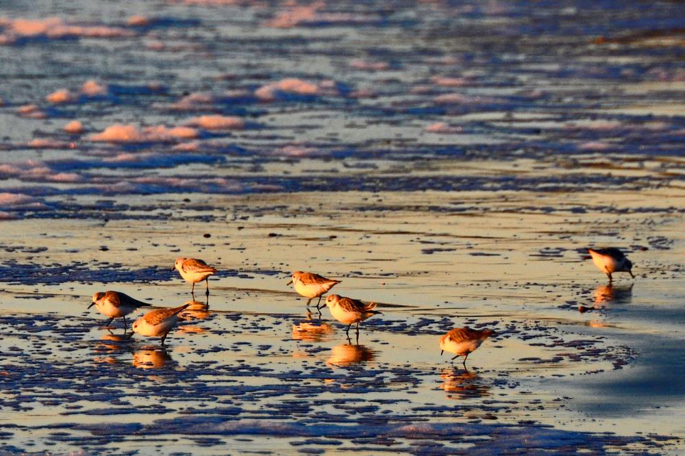 Tiny Birds