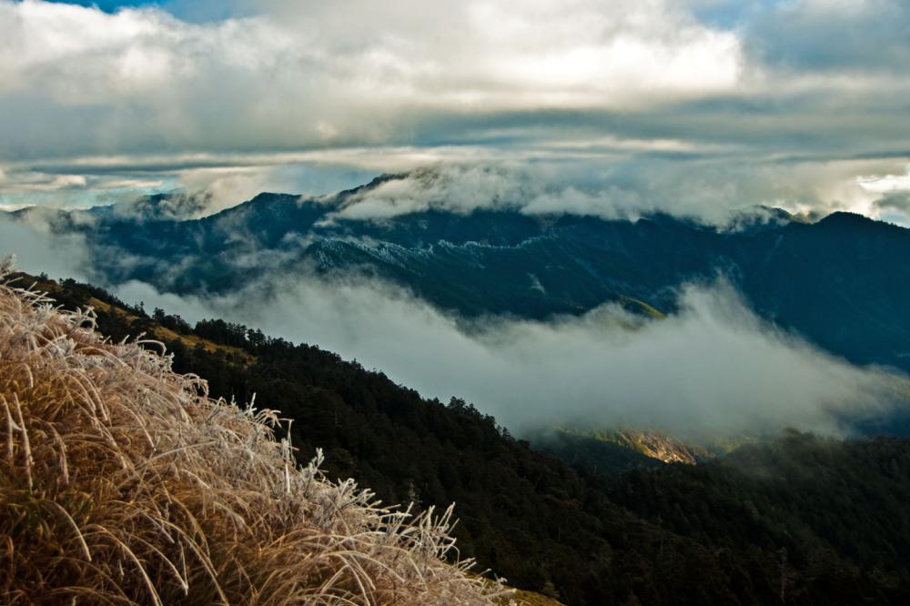 Fog and Glacier Grasses