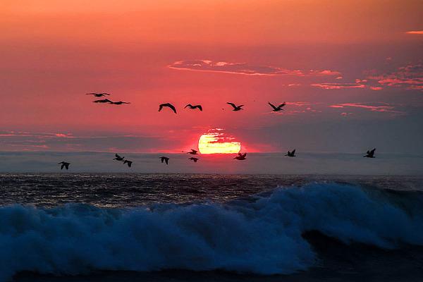 Joyful Freedom Scenic
