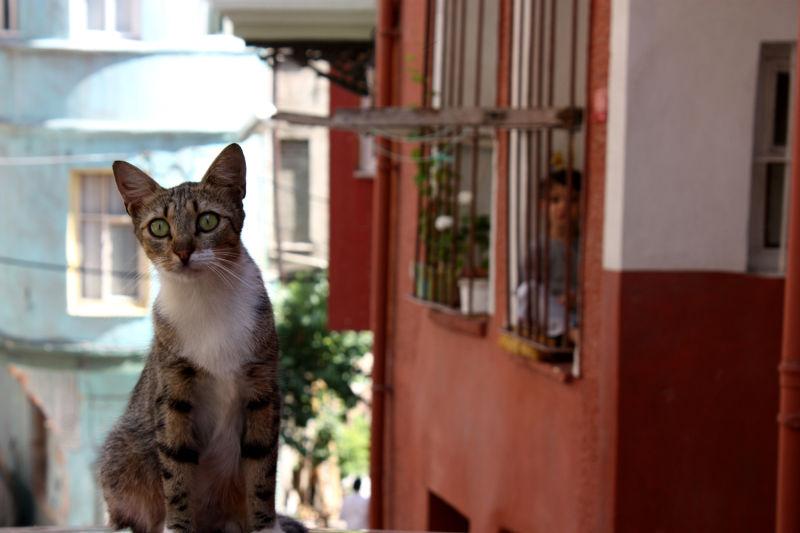 Cat in Curiosity