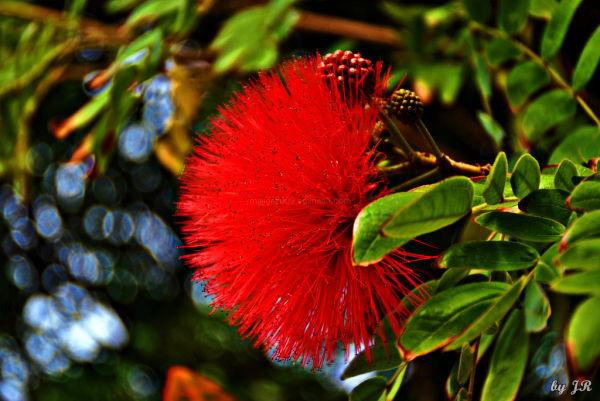 Looks Like A Red Porcupine