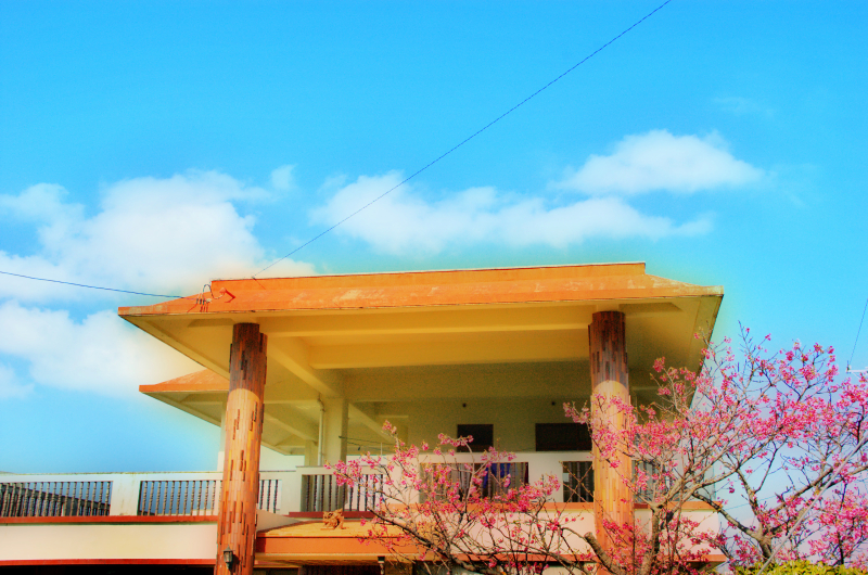 Okinawan House and Cherry Blossom Tree